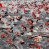 Εξοπλισμός κολύμβησης : Σωστή χρήση και συντήρηση Wetsuit